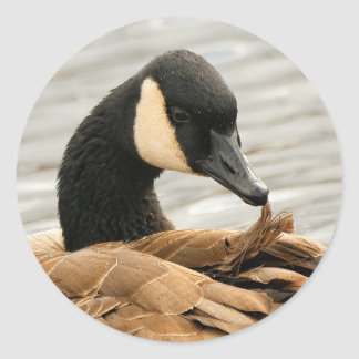 Canada Goose on the Lake Classic Round Sticker