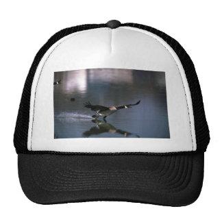 Canada Goose on water Trucker Hat