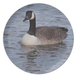 Canada Goose Plate