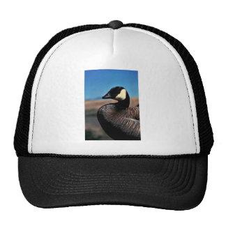 Canada goose portrait hat