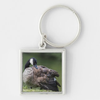 Canada Goose Preening Key Ring