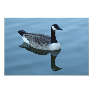 Canada Goose Reflection Art Photo