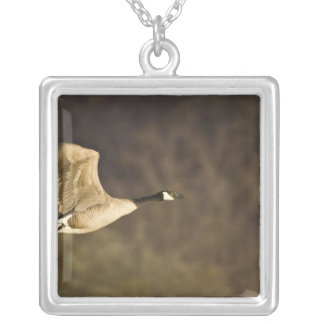 Canada Goose takes off for flight in wetlands Silver Plated Necklace