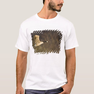 Canada Goose takes off for flight in wetlands T-Shirt