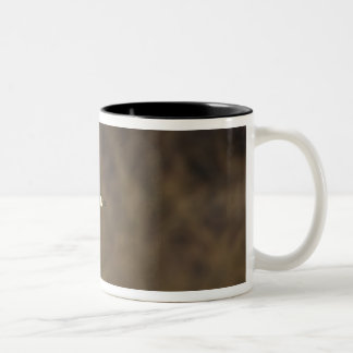Canada Goose takes off for flight in wetlands Two-Tone Coffee Mug