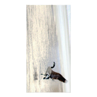 canada goose taking off photo card template