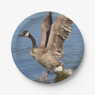 Canada Goose Taking Off The Water Paper Plate