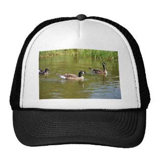Canada goose trio on Goose Lake, Anchorage Mesh Hats