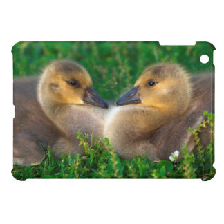 Canada Goslings that form a heart Cover For The iPad Mini
