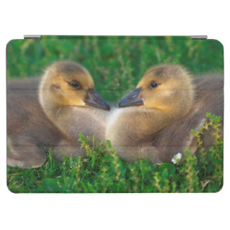 Canada Goslings that form a heart iPad Air Cover