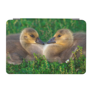 Canada Goslings that form a heart iPad Mini Cover