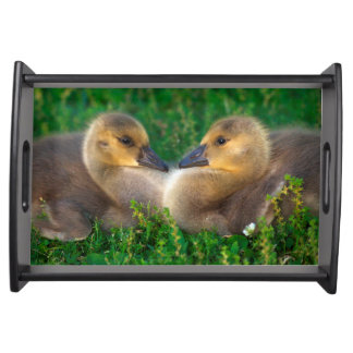 Canada Goslings that form a heart Serving Tray