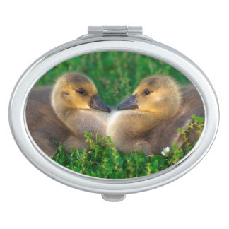 Canada Goslings that form a heart Vanity Mirror