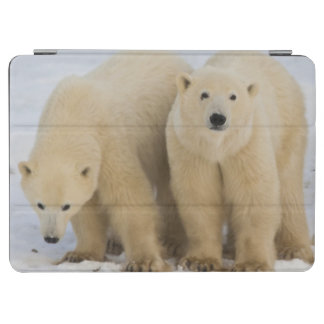 Canada, Hudson Bay. Polar bear mother with two iPad Air Cover
