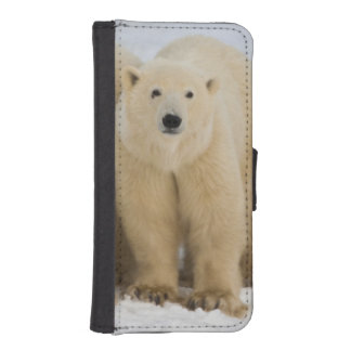Canada, Hudson Bay. Polar bear mother with two iPhone SE/5/5s Wallet Case