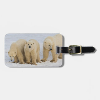 Canada, Hudson Bay. Polar bear mother with two Luggage Tag