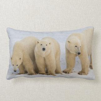 Canada, Hudson Bay. Polar bear mother with two Lumbar Pillow