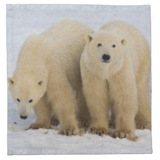 Canada, Hudson Bay. Polar bear mother with two Napkin