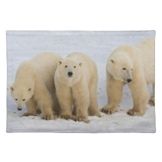 Canada, Hudson Bay. Polar bear mother with two Placemat