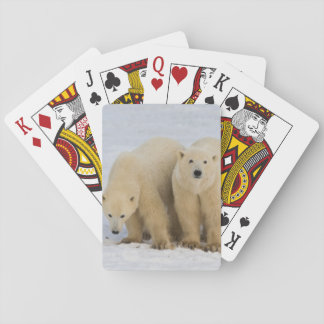 Canada, Hudson Bay. Polar bear mother with two Playing Cards