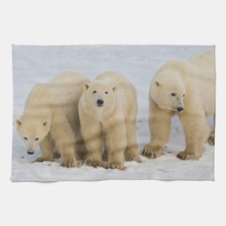 Canada, Hudson Bay. Polar bear mother with two Tea Towel