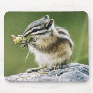 Canada, Jasper National Park, Yellow Pine Mouse Mat