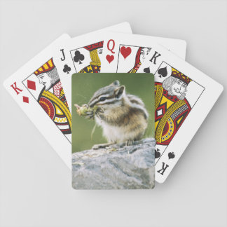 Canada, Jasper National Park, Yellow Pine Playing Cards