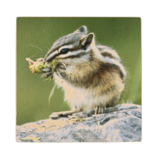 Canada, Jasper National Park, Yellow Pine Wood Coaster