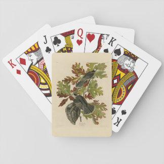 Canada Jay Poker Cards