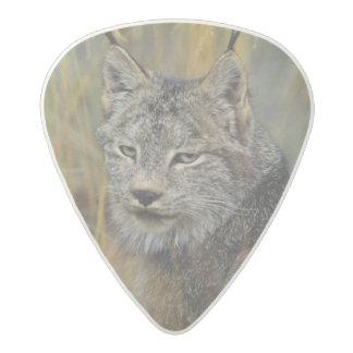 Canada, Kluane NP, near Haines Junction, Acetal Guitar Pick