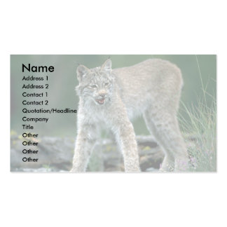 Canada lynx summer adult business cards