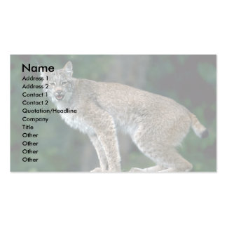 Canada lynx, summer adult pack of standard business cards