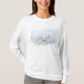 Canada, Manitoba, Churchill. Artic fox with T-Shirt