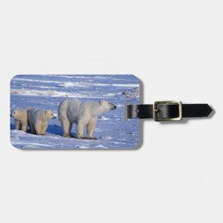 Canada, Manitoba, Churchill. Polar bear mother Luggage Tag