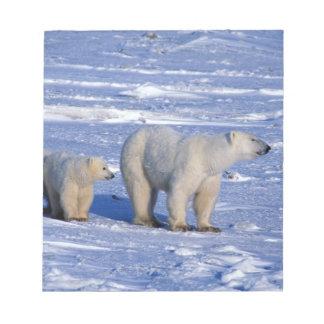 Canada, Manitoba, Churchill. Polar bear mother Notepad