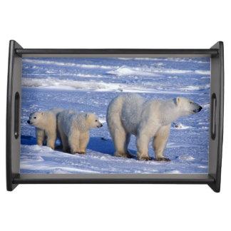 Canada, Manitoba, Churchill. Polar bear mother Serving Tray