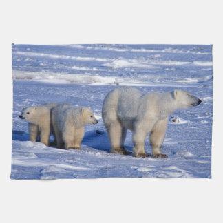 Canada, Manitoba, Churchill. Polar bear mother Tea Towel