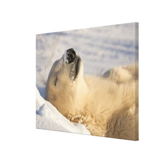 Canada, Manitoba, Hudson Bay, Churchill. 3 Canvas Print