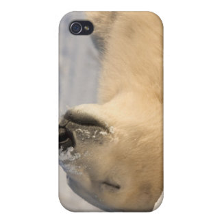 Canada, Manitoba, Hudson Bay, Churchill. 3 iPhone 4 Cover