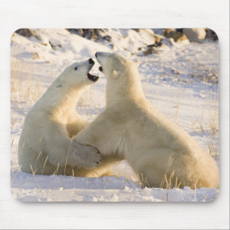 Canada, Manitoba, Hudson Bay, Churchill. 3 Mouse Pad