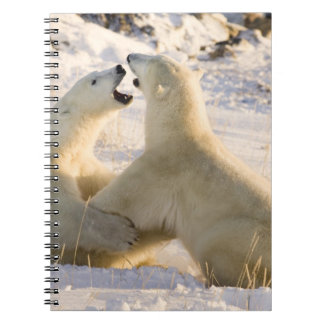 Canada, Manitoba, Hudson Bay, Churchill. 3 Spiral Notebook