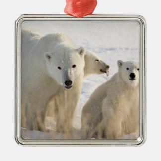 Canada, Manitoba, Hudson Bay, Churchill. 5 Christmas Ornament