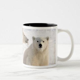 Canada, Manitoba, Hudson Bay, Churchill. 5 Two-Tone Coffee Mug
