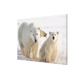Canada, Manitoba, Hudson Bay, Churchill. 6 Canvas Print