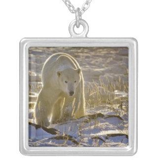 Canada, Manitoba, Hudson Bay, Churchill. 9 Silver Plated Necklace