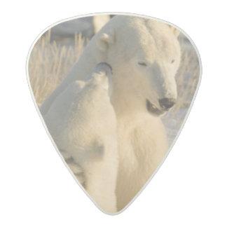 Canada, Manitoba, Hudson Bay, Churchill. Acetal Guitar Pick