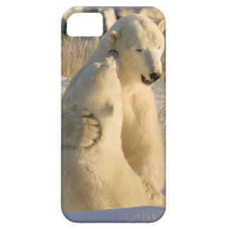 Canada, Manitoba, Hudson Bay, Churchill. Barely There iPhone 5 Case