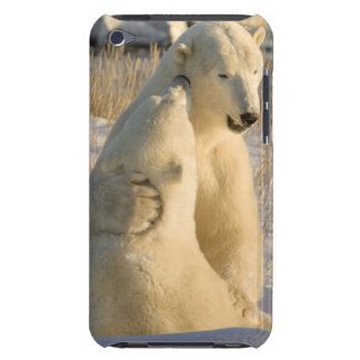 Canada, Manitoba, Hudson Bay, Churchill. Barely There iPod Covers