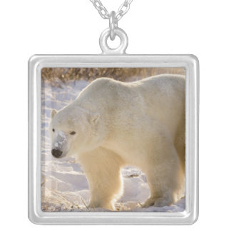 Canada, Manitoba, Hudson Bay, Churchill. Full Silver Plated Necklace