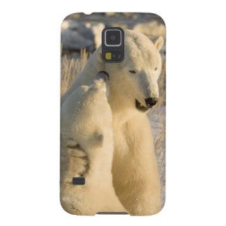 Canada, Manitoba, Hudson Bay, Churchill. Galaxy S5 Cover